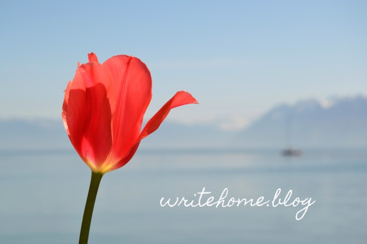 Tulip with watermark.jpg